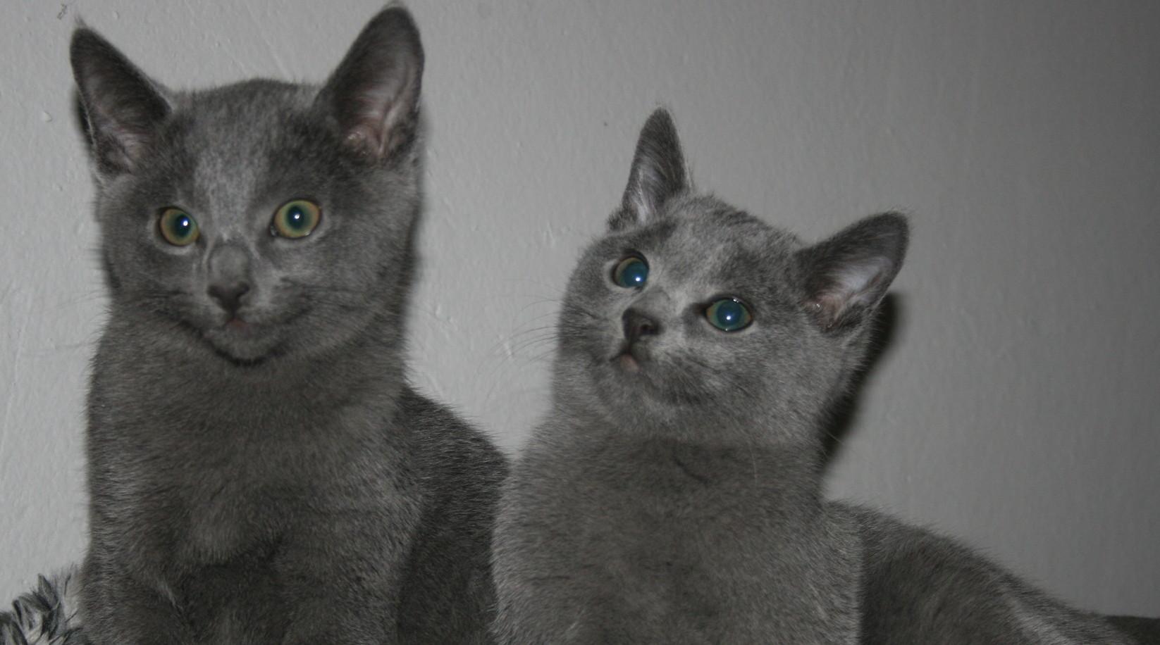 Koťátka vrhu F se již narodila :-)