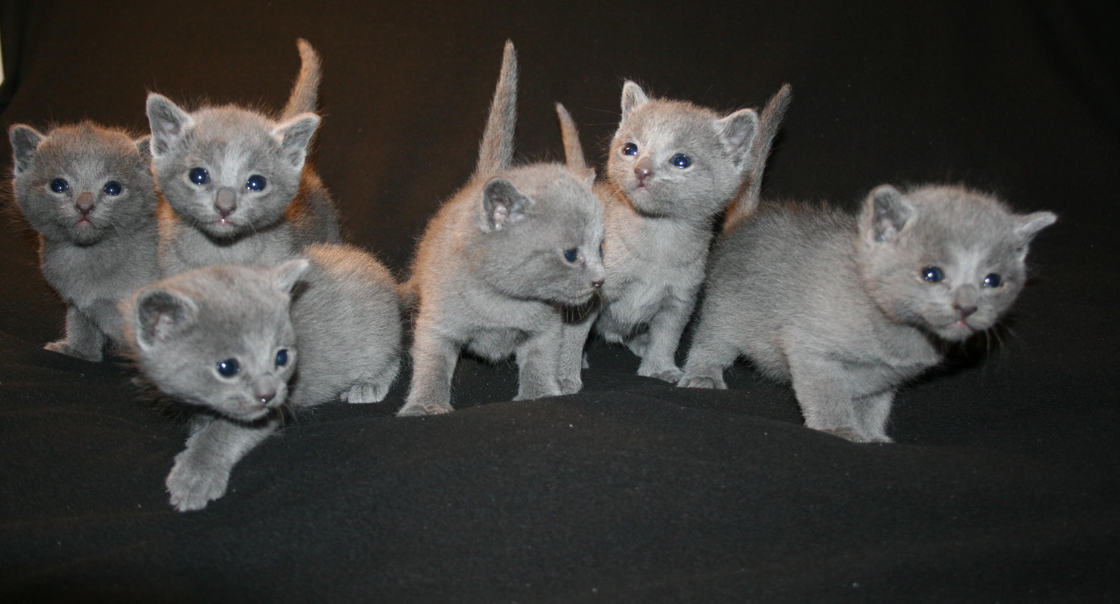 Rezervace koťátka