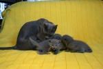kittens25012015046.jpg