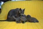 kittens25012015047.jpg