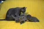 kittens25012015048.jpg