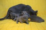 kittens25012015049.jpg