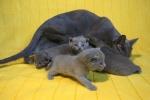kittens25012015050.jpg