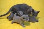kittens25012015051.jpg