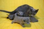 kittens25012015052.jpg