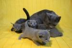 kittens25012015053.jpg