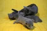 kittens25012015054.jpg