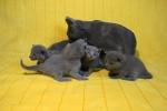 kittens25012015055.jpg