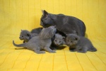 kittens25012015056.jpg