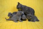 kittens25012015057.jpg