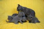 kittens25012015058.jpg