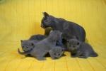 kittens25012015059.jpg