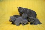 kittens25012015060.jpg