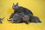 kittens25012015061.jpg