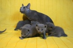 kittens25012015062.jpg