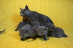 kittens25012015063.jpg