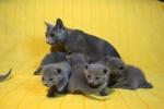 kittens25012015064.jpg