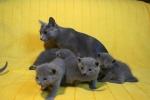 kittens25012015065.jpg