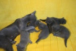 kittens25012015008.jpg