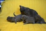 kittens25012015066.jpg