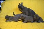 kittens25012015067.jpg