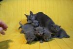kittens25012015068.jpg
