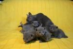 kittens25012015069.jpg