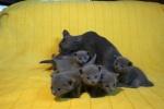 kittens25012015070.jpg
