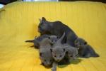 kittens25012015071.jpg