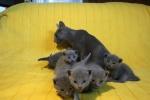 kittens25012015072.jpg