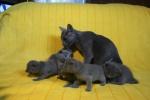 kittens25012015073.jpg