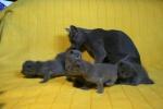 kittens25012015074.jpg