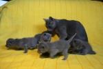 kittens25012015075.jpg