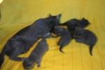 kittens25012015009.jpg