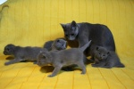 kittens25012015076.jpg