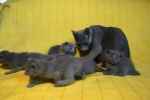 kittens25012015077.jpg