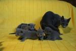 kittens25012015078.jpg