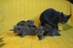 kittens25012015079.jpg