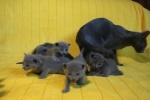 kittens25012015080.jpg