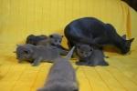 kittens25012015082.jpg