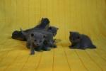 kittens25012015083.jpg