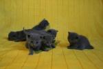 kittens25012015084.jpg
