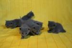 kittens25012015085.jpg