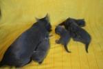 kittens25012015010.jpg