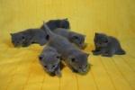 kittens25012015086.jpg