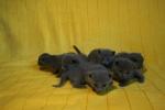 kittens25012015087.jpg