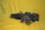 kittens25012015088.jpg