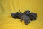 kittens25012015089.jpg
