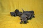 kittens25012015091.jpg