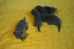 kittens25012015011.jpg